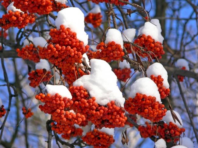 Get your Garden Winter Ready